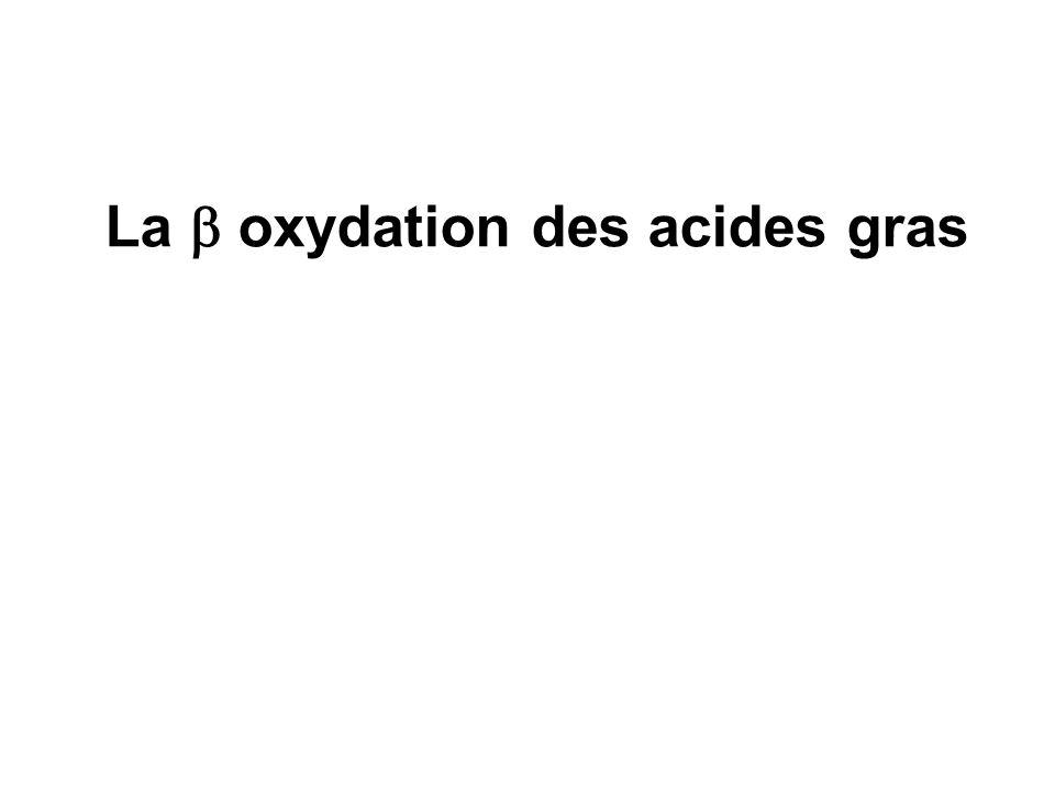 La oxydation des acides gras