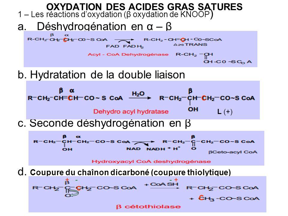 OXYDATION DES ACIDES GRAS SATURES 1 – Les réactions doxydation (β oxydation de KNOOP ) a.Déshydrogénation en α – β b. Hydratation de la double liaison