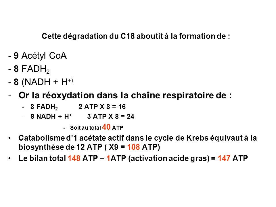 Cette dégradation du C18 aboutit à la formation de : - 9 Acétyl CoA - 8 FADH 2 - 8 (NADH + H +) -Or la réoxydation dans la chaîne respiratoire de : -8
