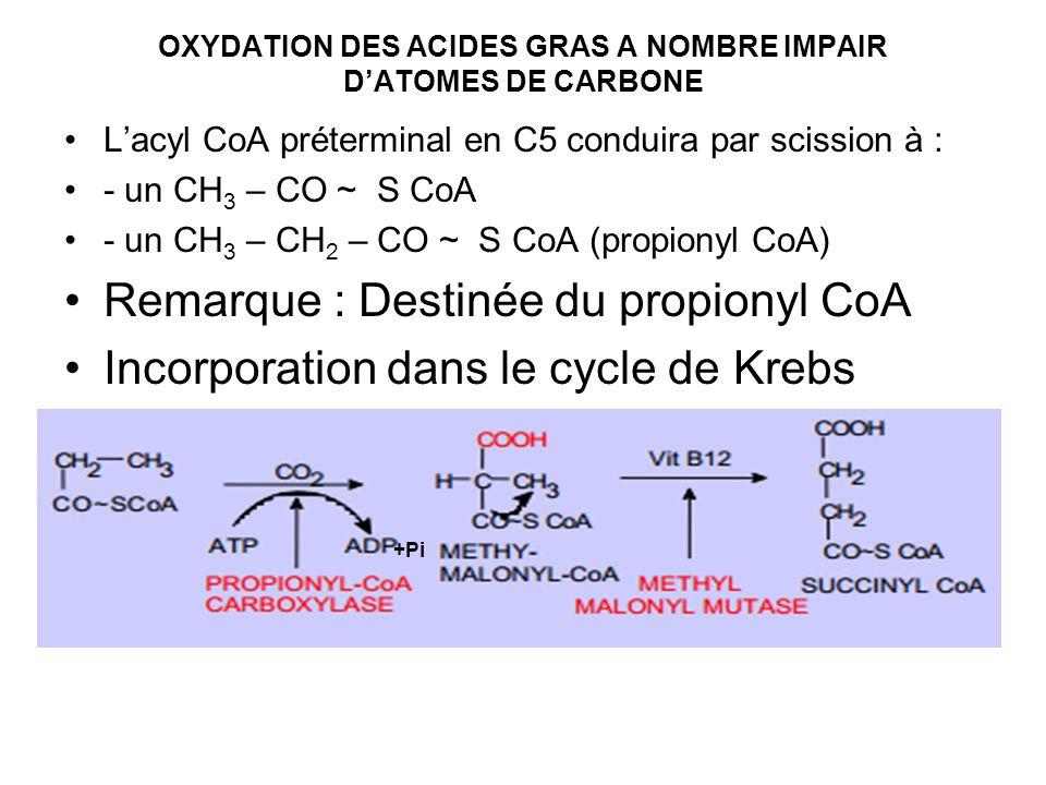 OXYDATION DES ACIDES GRAS A NOMBRE IMPAIR DATOMES DE CARBONE Lacyl CoA préterminal en C5 conduira par scission à : - un CH 3 – CO ~ S CoA - un CH 3 –