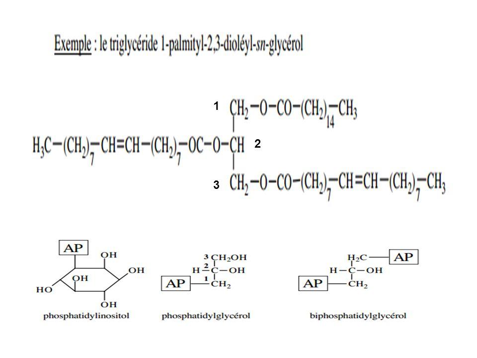 -OXYDATION DES ACIDES GRAS NON SATURES 1°) Élimination de 3 chaînons dacétyl CoA par action successive de 3 tours de spire de lhélice de Lynen L isomérase transforme la liaison cis en trans et la déplace entre C2 et C3, ce qui permet à la ß-oxydation de se poursuivre.