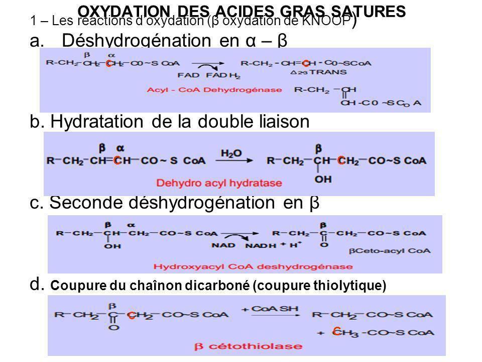 OXYDATION DES ACIDES GRAS SATURES 1 – Les réactions doxydation (β oxydation de KNOOP ) a.Déshydrogénation en α – β b.