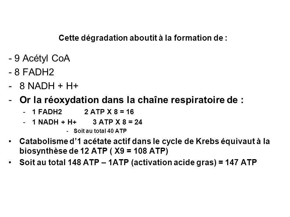 Cette dégradation aboutit à la formation de : - 9 Acétyl CoA - 8 FADH2 -8 NADH + H+ -Or la réoxydation dans la chaîne respiratoire de : -1 FADH2 2 ATP X 8 = 16 -1 NADH + H+ 3 ATP X 8 = 24 -Soit au total 40 ATP Catabolisme d1 acétate actif dans le cycle de Krebs équivaut à la biosynthèse de 12 ATP ( X9 = 108 ATP) Soit au total 148 ATP – 1ATP (activation acide gras) = 147 ATP