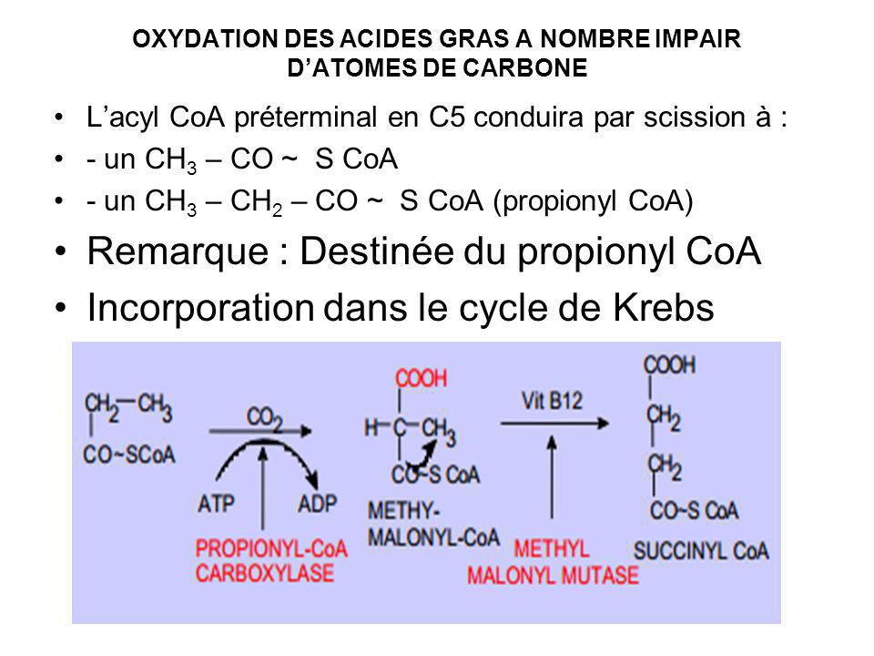 OXYDATION DES ACIDES GRAS A NOMBRE IMPAIR DATOMES DE CARBONE Lacyl CoA préterminal en C5 conduira par scission à : - un CH 3 – CO ~ S CoA - un CH 3 – CH 2 – CO ~ S CoA (propionyl CoA) Remarque : Destinée du propionyl CoA Incorporation dans le cycle de Krebs