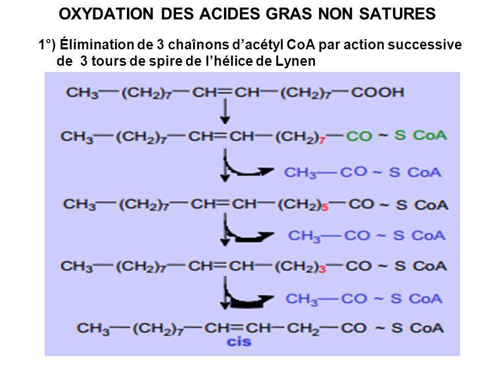 OXYDATION DES ACIDES GRAS NON SATURES 1°) Élimination de 3 chaînons dacétyl CoA par action successive de 3 tours de spire de lhélice de Lynen