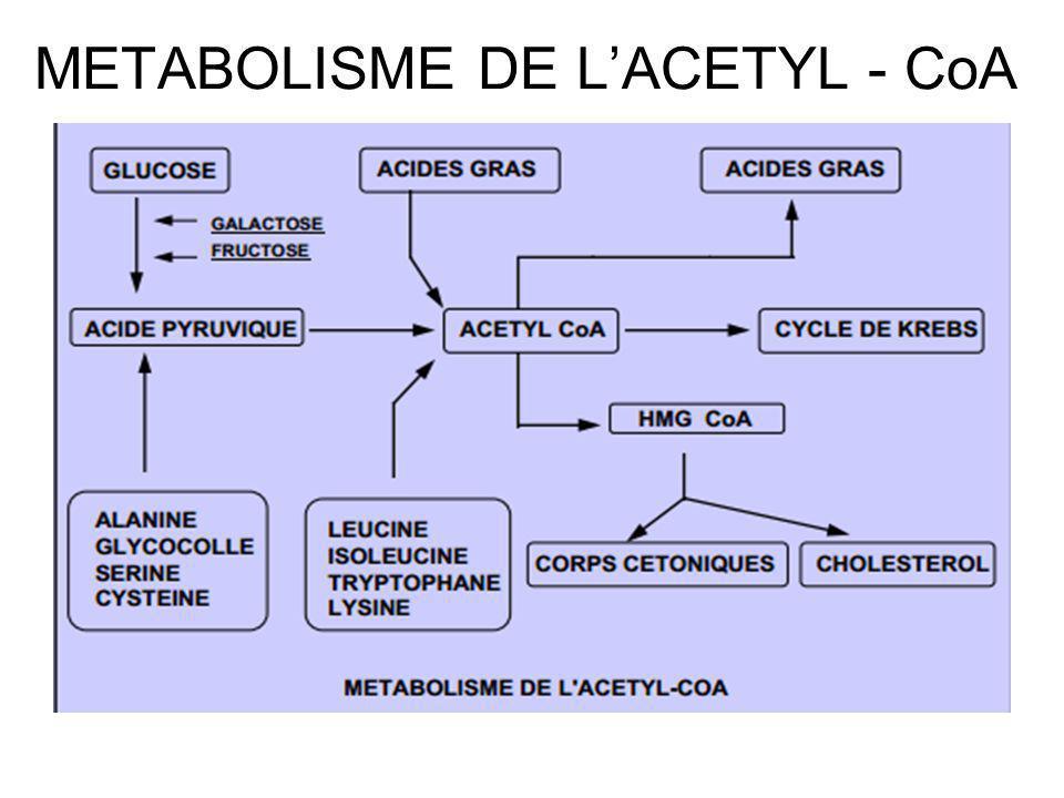 METABOLISME DE LACETYL - CoA