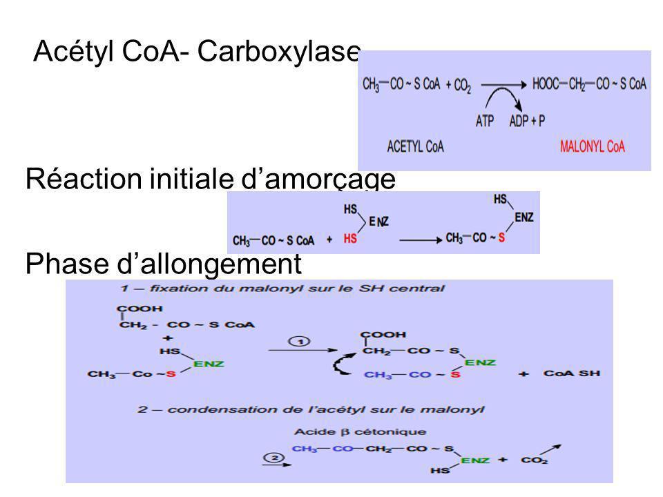 Acétyl CoA- Carboxylase Réaction initiale damorçage Phase dallongement