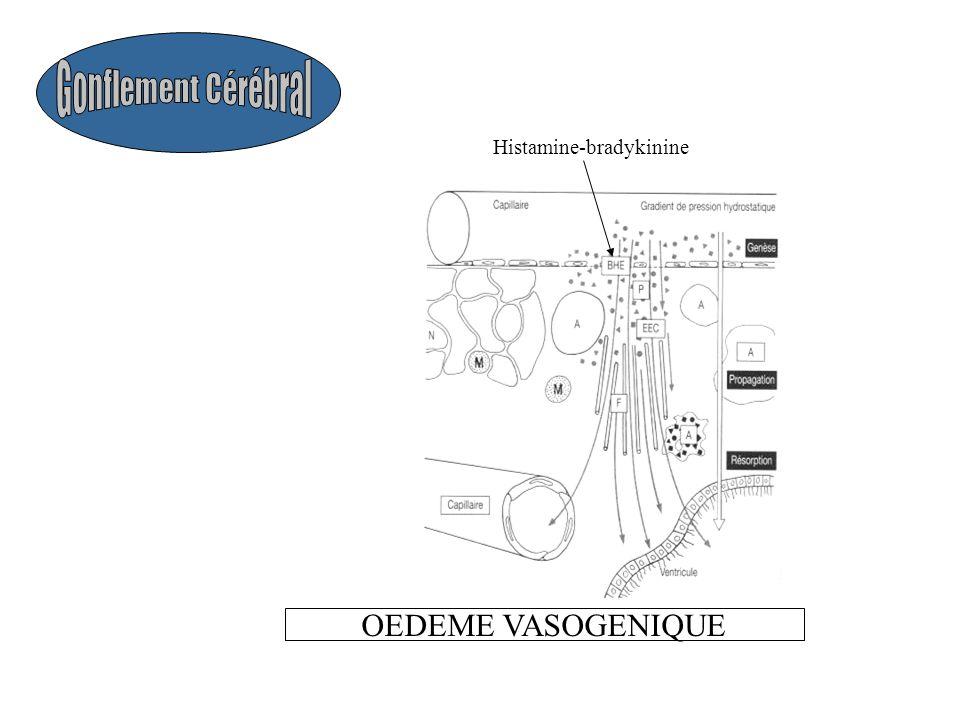 Histamine-bradykinine OEDEME VASOGENIQUE