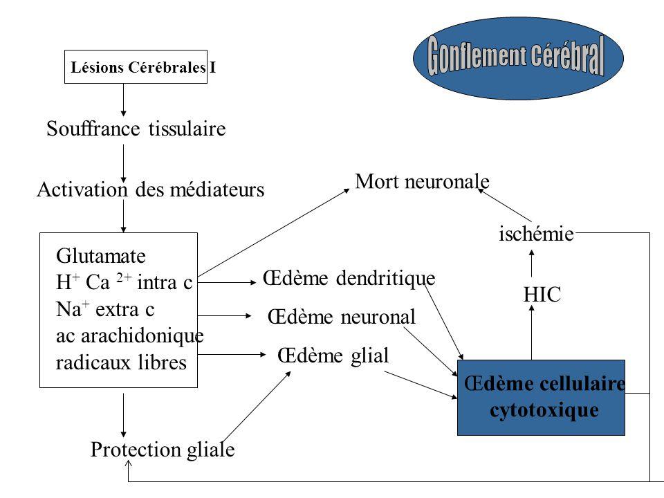 Souffrance tissulaire Activation des médiateurs Glutamate H + Ca 2+ intra c Na + extra c ac arachidonique radicaux libres Protection gliale Œdème glial Œdème dendritique Œdème cellulaire cytotoxique HIC ischémie Mort neuronale Lésions Cérébrales I Œdème neuronal