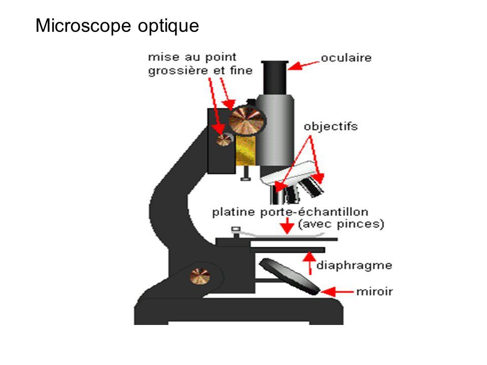 A B B A B1B1 A1A1 F1F1 F1F1 F2F2 F2F2 L1L1 L2L2 Microscope ABA1B1A1B1 objectif L1 oculaire L2