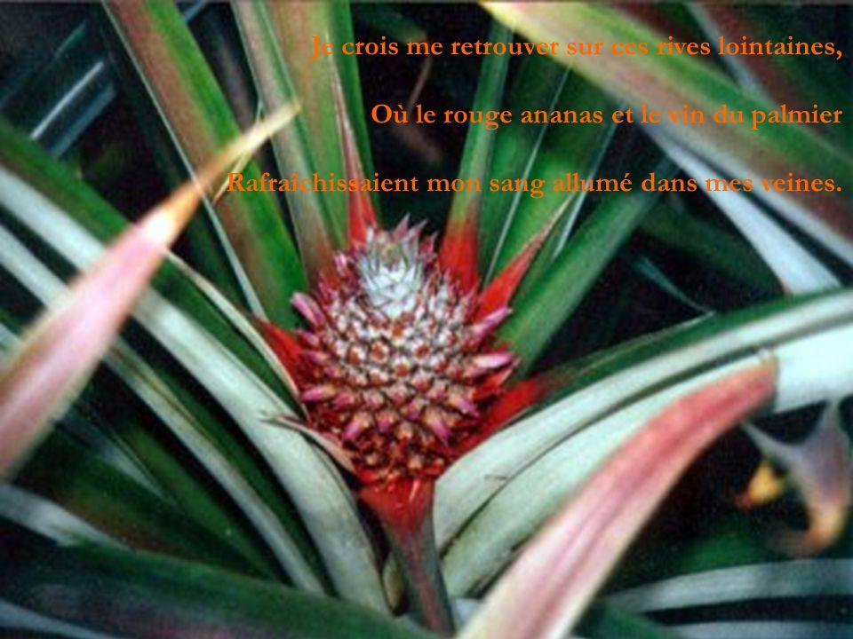 Je crois me retrouver sur ces rives lointaines, Où le rouge ananas et le vin du palmier Rafraîchissaient mon sang allumé dans mes veines.