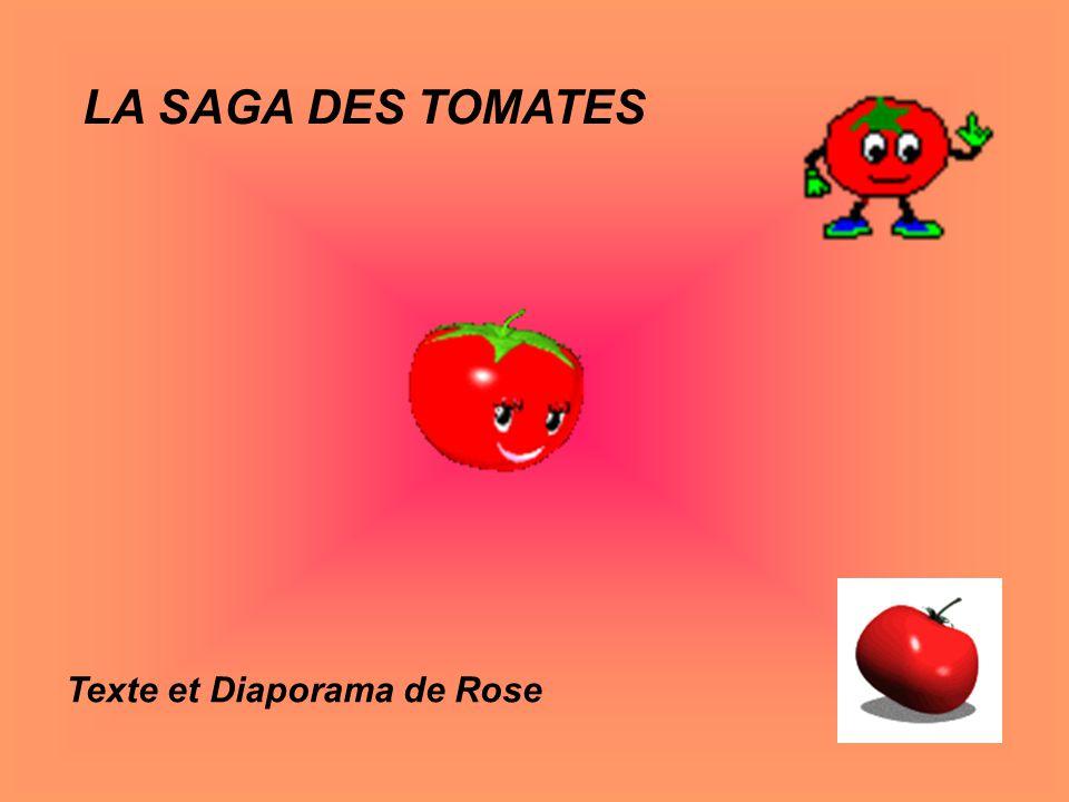 LA SAGA DES TOMATES Texte et Diaporama de Rose