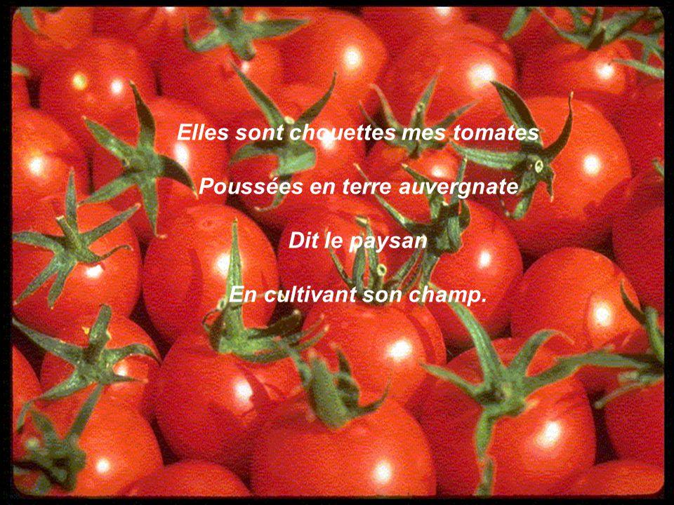 Elles sont chouettes mes tomates Poussées en terre auvergnate Dit le paysan En cultivant son champ.
