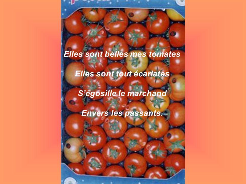Elles sont belles mes tomates Elles sont tout écarlates Ségosille le marchand Envers les passants.