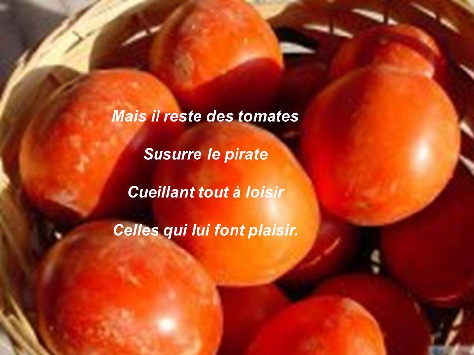 Mais il reste des tomates Susurre le pirate Cueillant tout à loisir Celles qui lui font plaisir.