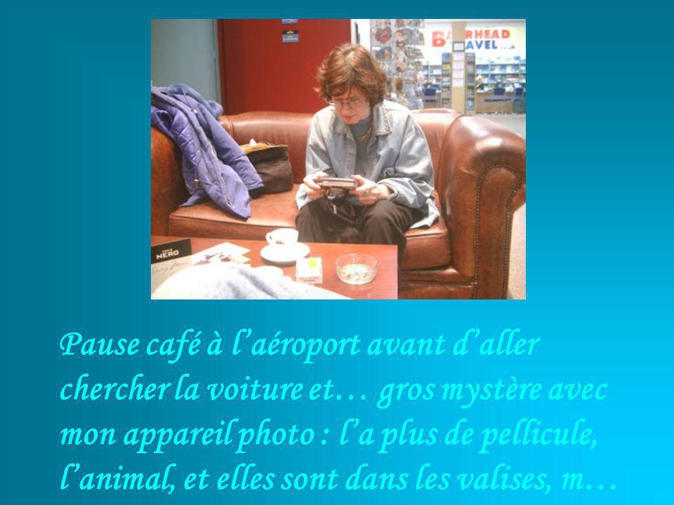 Pause café à laéroport avant daller chercher la voiture et… gros mystère avec mon appareil photo : la plus de pellicule, lanimal, et elles sont dans les valises, m…