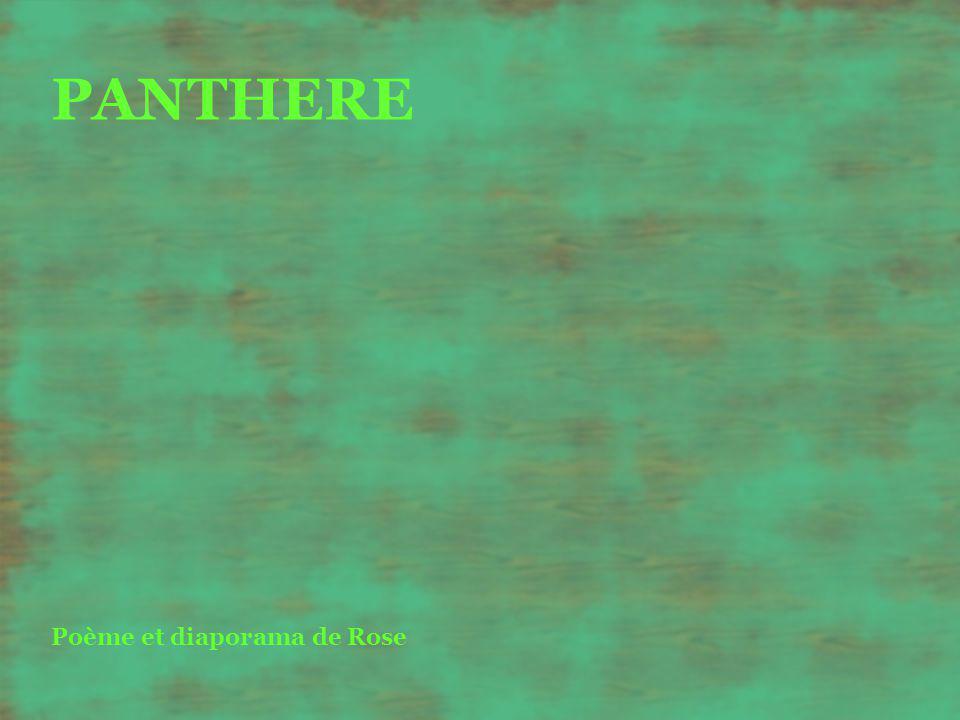 PANTHERE Poème et diaporama de Rose