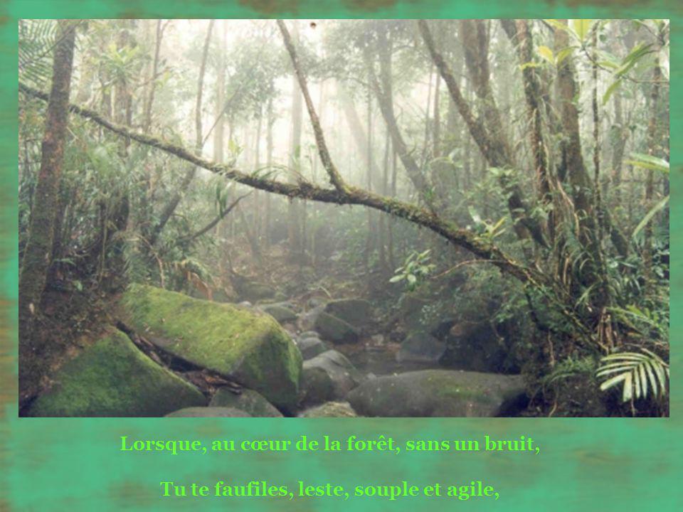 Lorsque, au cœur de la forêt, sans un bruit, Tu te faufiles, leste, souple et agile,