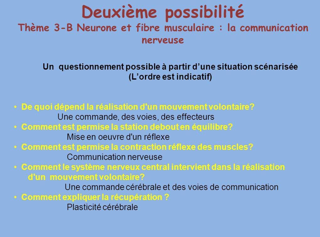 Deuxième possibilité Thème 3-B Neurone et fibre musculaire : la communication nerveuse Un questionnement possible à partir dune situation scénarisée (