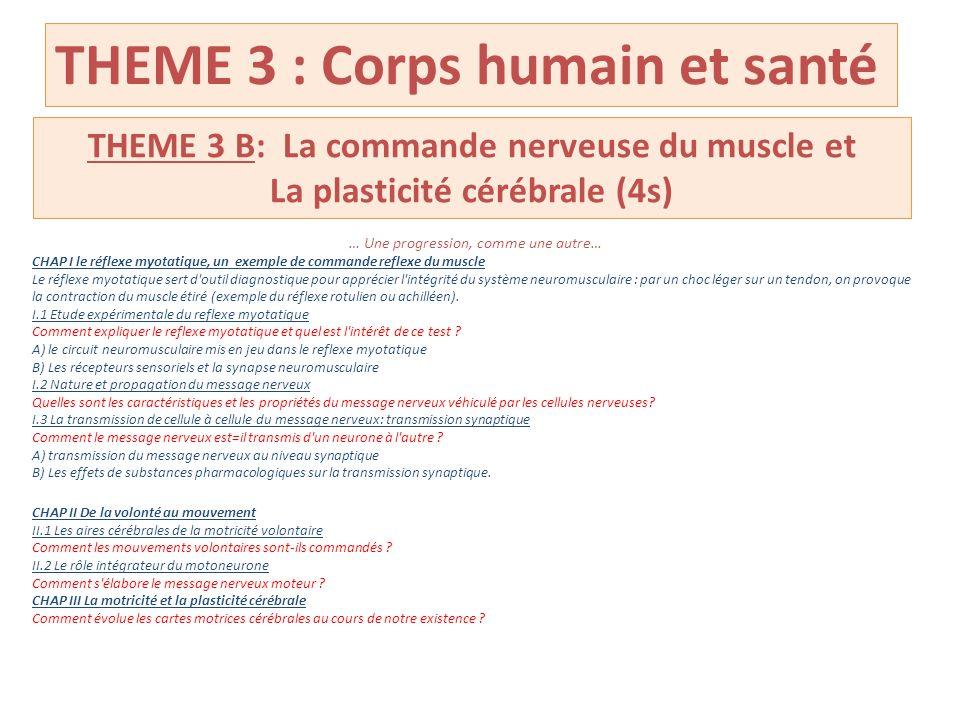 THEME 3 : Corps humain et santé THEME 3 B: La commande nerveuse du muscle et La plasticité cérébrale (4s) … Une progression, comme une autre… CHAP I l