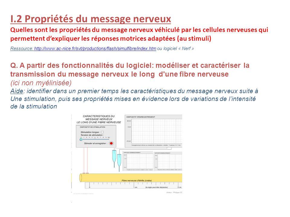 I.2 Propriétés du message nerveux Quelles sont les propriétés du message nerveux véhiculé par les cellules nerveuses qui permettent dexpliquer les rép