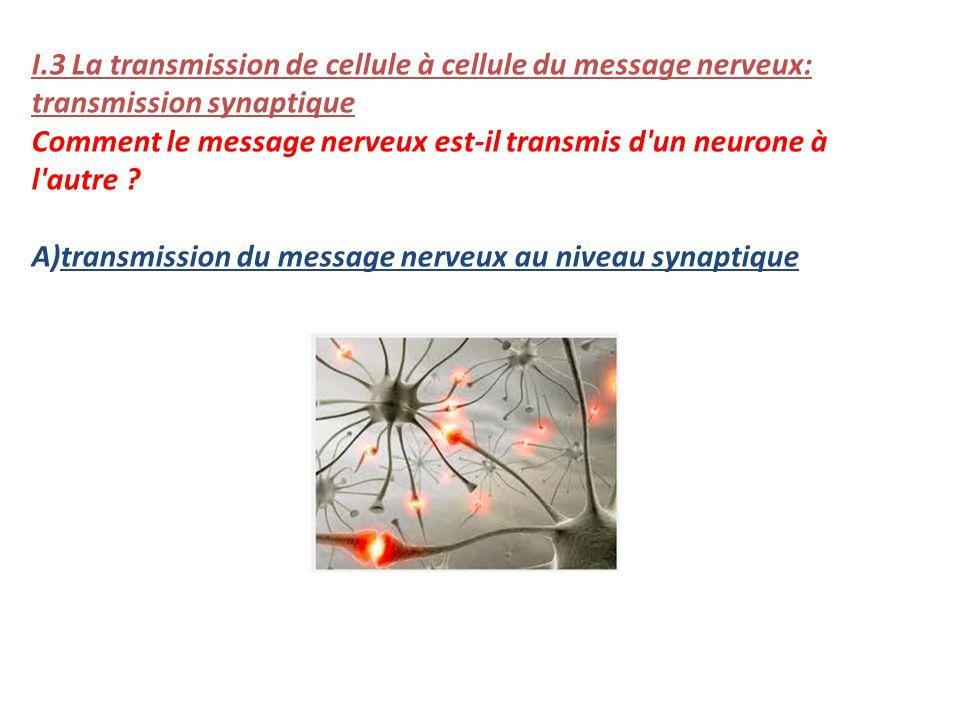 I.3 La transmission de cellule à cellule du message nerveux: transmission synaptique Comment le message nerveux est-il transmis d'un neurone à l'autre