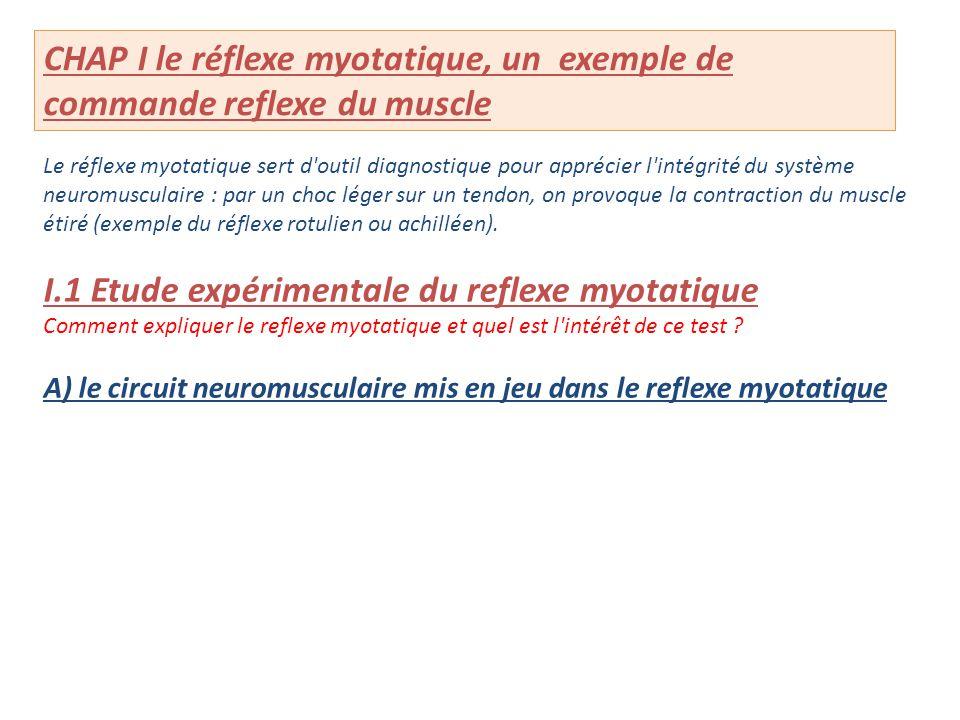 Le réflexe myotatique sert d'outil diagnostique pour apprécier l'intégrité du système neuromusculaire : par un choc léger sur un tendon, on provoque l