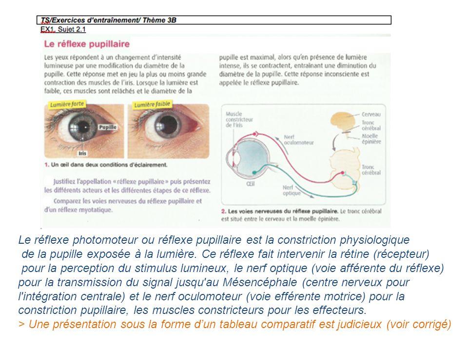 Le réflexe photomoteur ou réflexe pupillaire est la constriction physiologique de la pupille exposée à la lumière. Ce réflexe fait intervenir la rétin