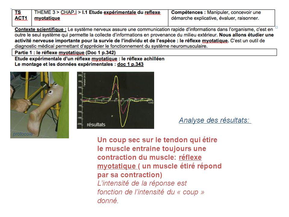 protocole résultats Un coup sec sur le tendon qui étire le muscle entraine toujours une contraction du muscle: réflexe myotatique ( un muscle étiré ré
