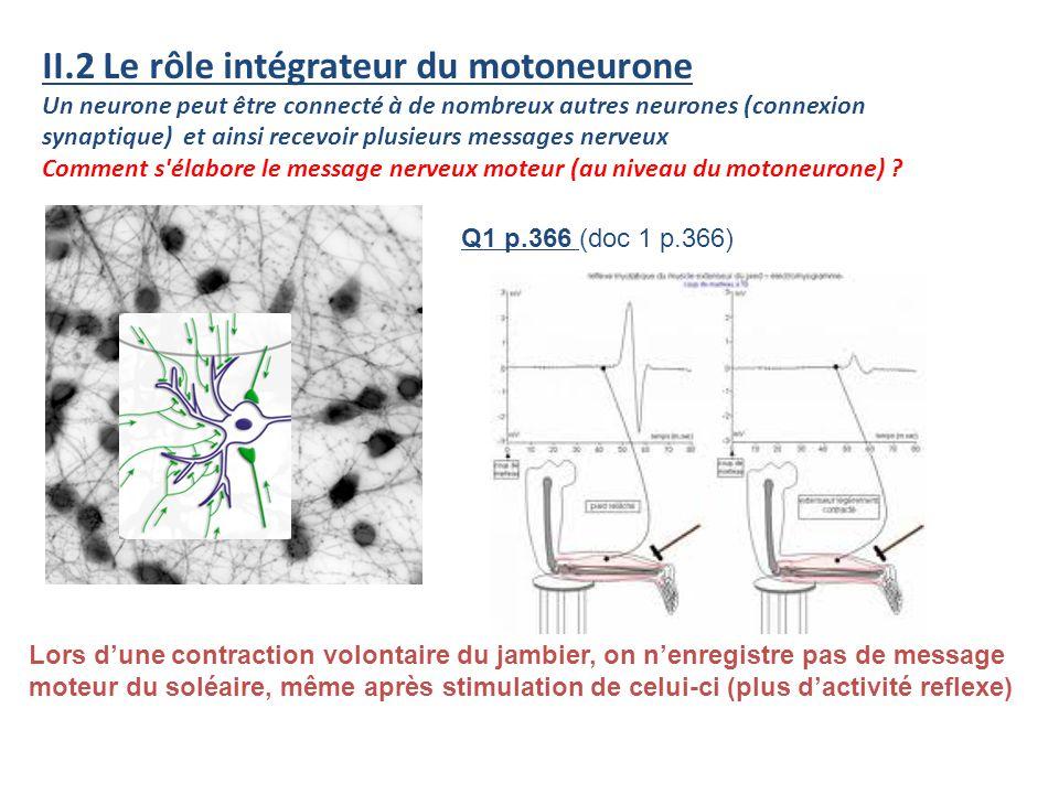 II.2 Le rôle intégrateur du motoneurone Un neurone peut être connecté à de nombreux autres neurones (connexion synaptique) et ainsi recevoir plusieurs