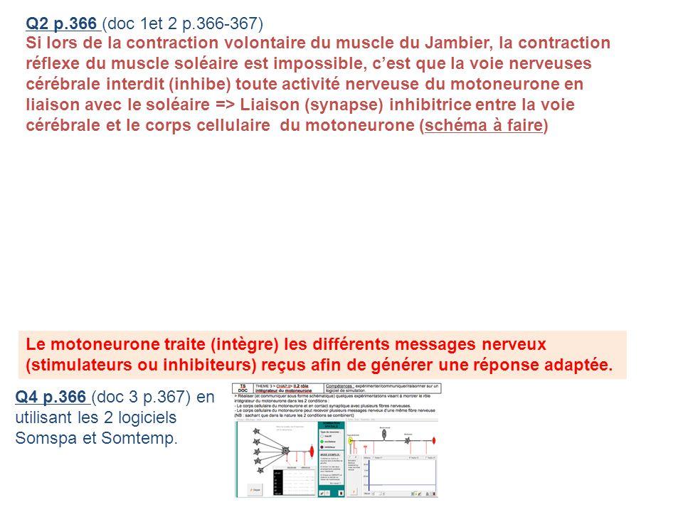 Q2 p.366 (doc 1et 2 p.366-367) Si lors de la contraction volontaire du muscle du Jambier, la contraction réflexe du muscle soléaire est impossible, ce