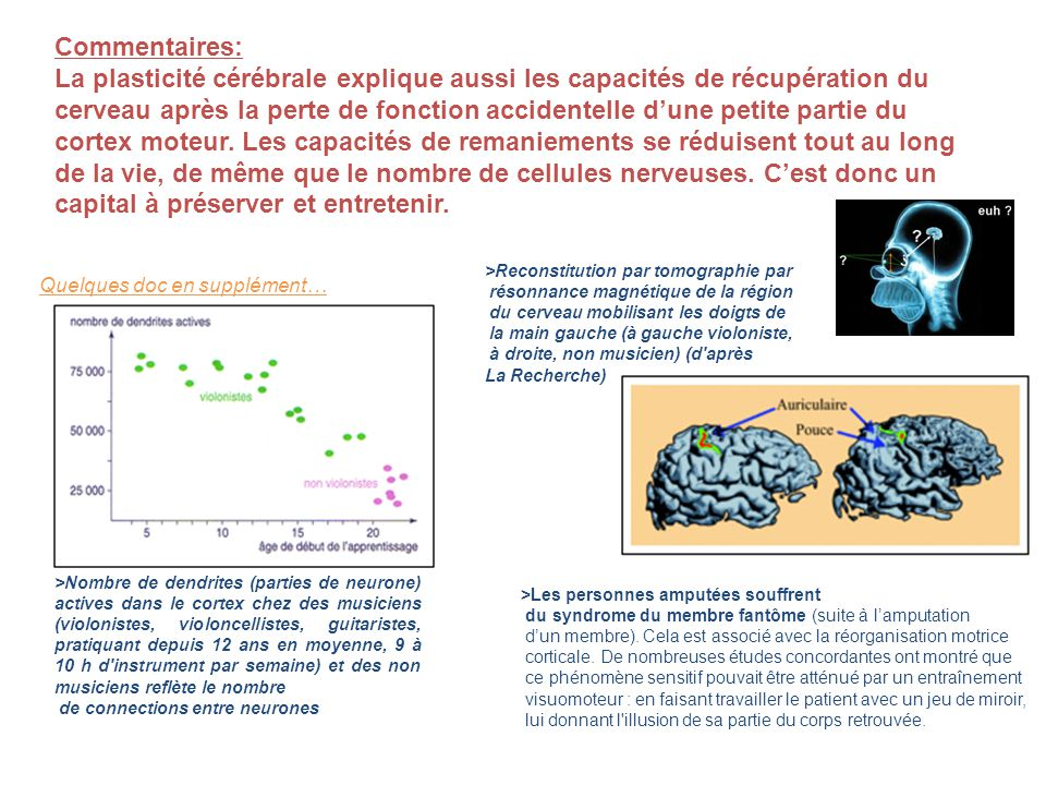 Commentaires: La plasticité cérébrale explique aussi les capacités de récupération du cerveau après la perte de fonction accidentelle dune petite part