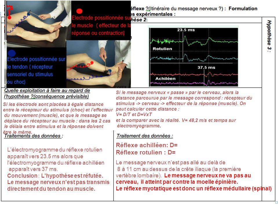 Si les électrode sont placées à égale distance entre le récepteur du stimulus (choc) et leffecteur du mouvement (muscle), et que le message se déplace