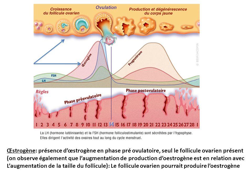 Œstrogène: présence dœstrogène en phase pré ovulatoire, seul le follicule ovarien présent (on observe également que laugmentation de production doestrogène est en relation avec Laugmentation de la taille du follicule): Le follicule ovarien pourrait produire loestrogène