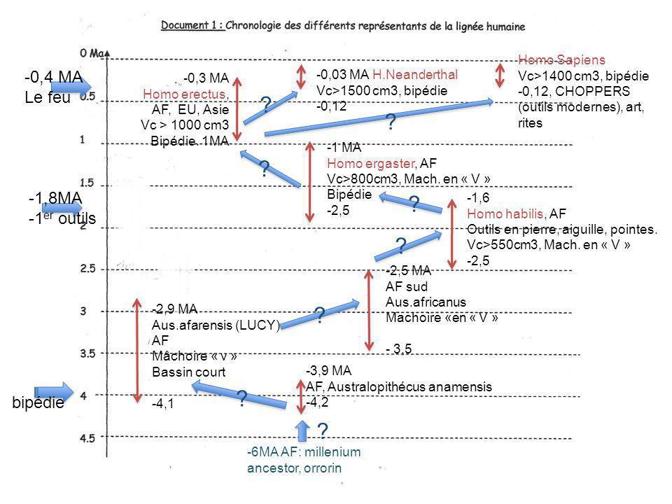 -3,9 MA AF, Australopithécus anamensis -4,2 -2,9 MA Aus.afarensis (LUCY) AF Mâchoire « v » Bassin court -4,1 -2,5 MA AF sud Aus.africanus Machoire «en