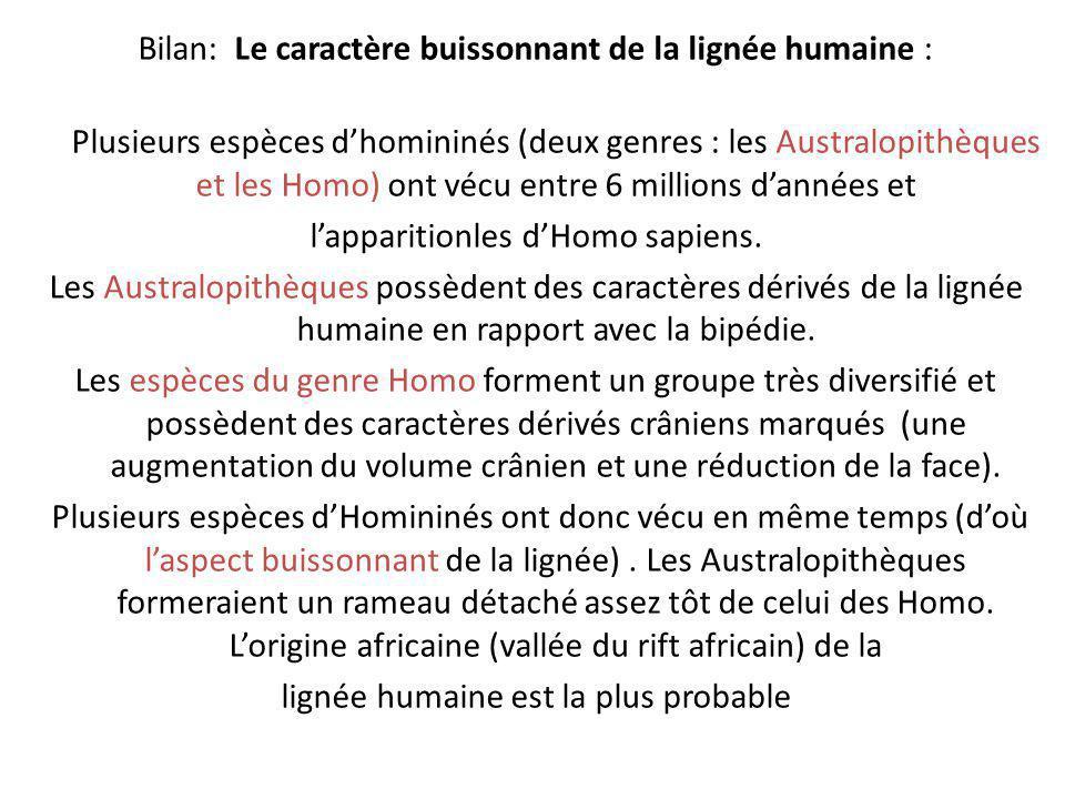 Bilan: Le caractère buissonnant de la lignée humaine : Plusieurs espèces dhomininés (deux genres : les Australopithèques et les Homo) ont vécu entre 6