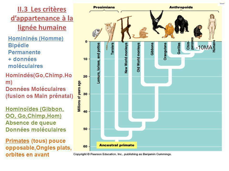 II.3 Les critères dappartenance à la lignée humaine Homininés (Homme) Bipédie Permanente + données moléculaires Homindés(Go,Chimp.Ho m) Données Molécu