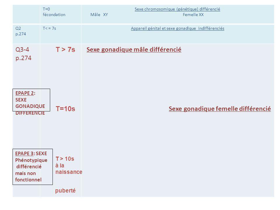 T=0 fécondation Sexe chromosomique (génétique) différencié Mâle XY Femelle XX Q2 p.274 T< = 7sAppareil génital et sexe gonadique indifférenciés Q3-4 p