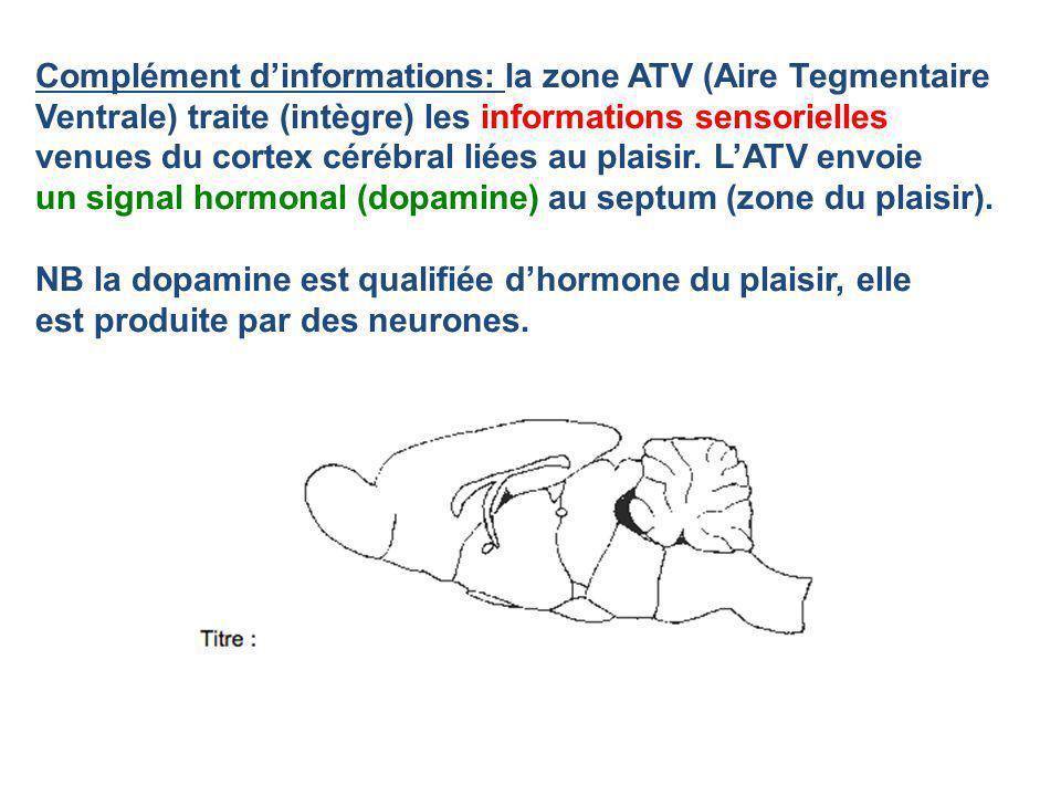 Complément dinformations: la zone ATV (Aire Tegmentaire Ventrale) traite (intègre) les informations sensorielles venues du cortex cérébral liées au pl