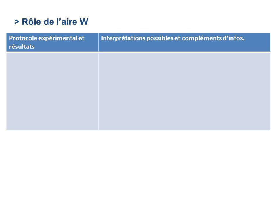 > Rôle de laire W Protocole expérimental et résultats Interprétations possibles et compléments dinfos.