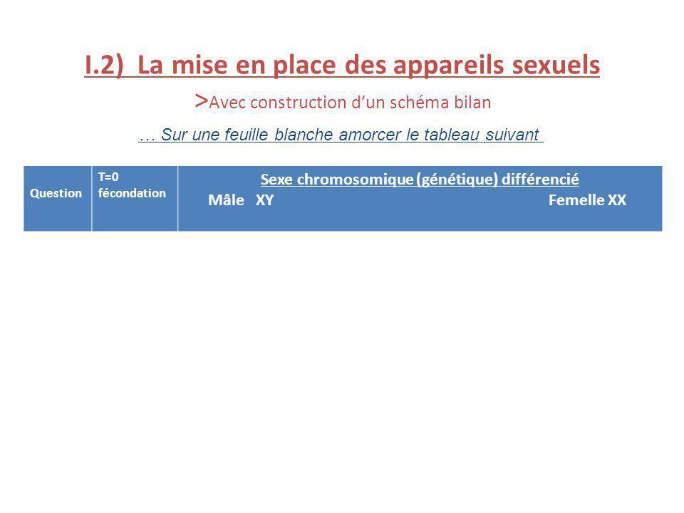 I.2) La mise en place des appareils sexuels > Avec construction dun schéma bilan … Sur une feuille blanche amorcer le tableau suivant Question T=0 féc
