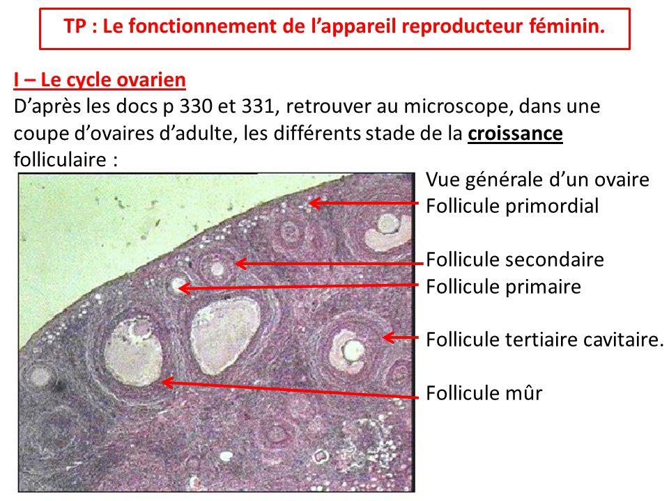 TP : Le fonctionnement de lappareil reproducteur féminin. I – Le cycle ovarien Daprès les docs p 330 et 331, retrouver au microscope, dans une coupe d