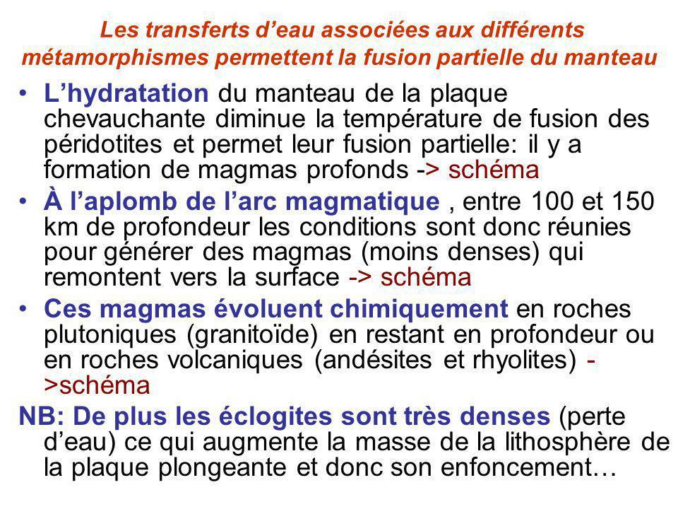 Les transferts deau associées aux différents métamorphismes permettent la fusion partielle du manteau Lhydratation du manteau de la plaque chevauchante diminue la température de fusion des péridotites et permet leur fusion partielle: il y a formation de magmas profonds -> schéma À laplomb de larc magmatique, entre 100 et 150 km de profondeur les conditions sont donc réunies pour générer des magmas (moins denses) qui remontent vers la surface -> schéma Ces magmas évoluent chimiquement en roches plutoniques (granitoïde) en restant en profondeur ou en roches volcaniques (andésites et rhyolites) - >schéma NB: De plus les éclogites sont très denses (perte deau) ce qui augmente la masse de la lithosphère de la plaque plongeante et donc son enfoncement…
