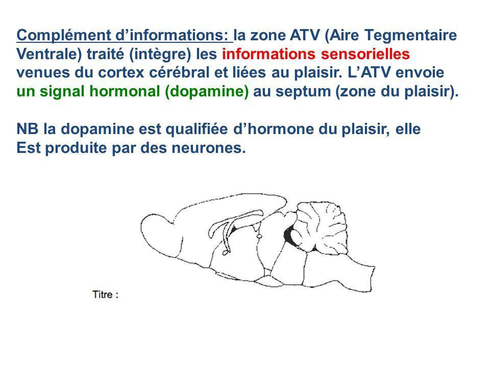 Complément dinformations: la zone ATV (Aire Tegmentaire Ventrale) traité (intègre) les informations sensorielles venues du cortex cérébral et liées au