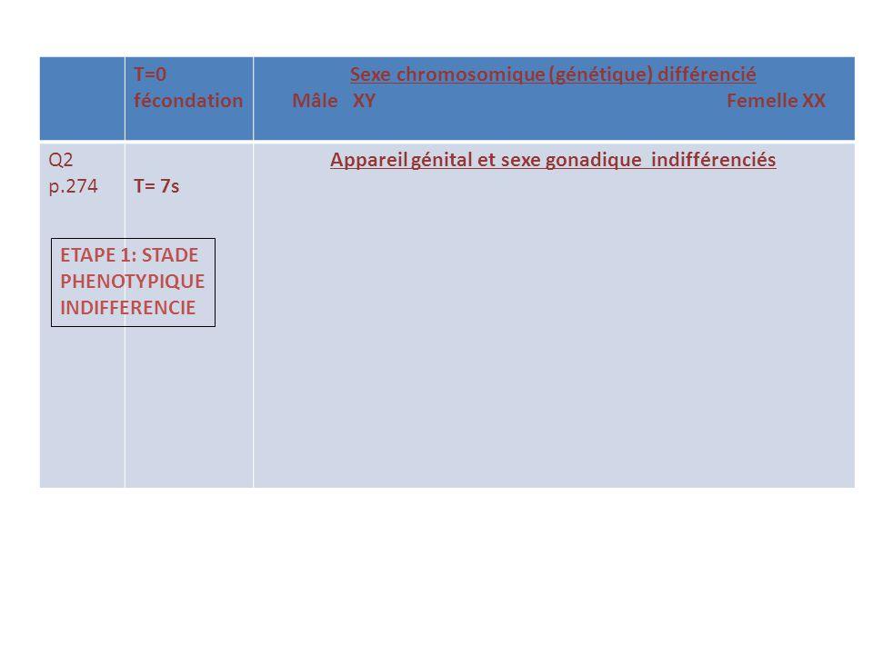 T=0 fécondation Sexe chromosomique (génétique) différencié Mâle XY Femelle XX Q2 p.274T= 7s Appareil génital et sexe gonadique indifférenciés ETAPE 1: