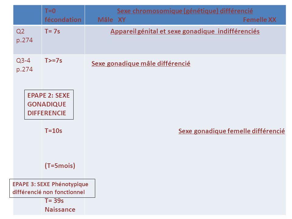 T=0 fécondation Sexe chromosomique (génétique) différencié Mâle XY Femelle XX Q2 p.274 T= 7sAppareil génital et sexe gonadique indifférenciés Q3-4 p.274 T>=7s T=10s (T=5mois T= 39s Naissance Sexes gonadiques mâle (7S) et femelle (10s) différenciés DOC p.276 278 T= 10 à 17 ans Phénotype sexuel différencié fonctionnel à la puberté Mise en place des caractères sexuels secondaires EPAPE 4: SEXE Phénotypique fonctionnel à la puberté Différenciation des voies génitales)