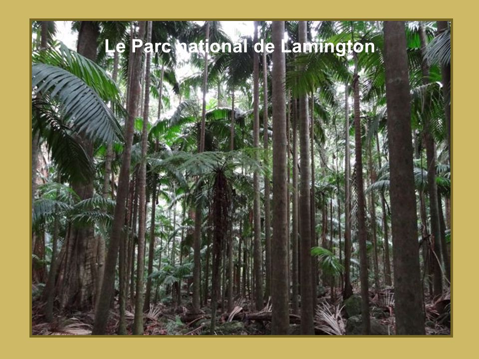 Le Parc national de Lamington