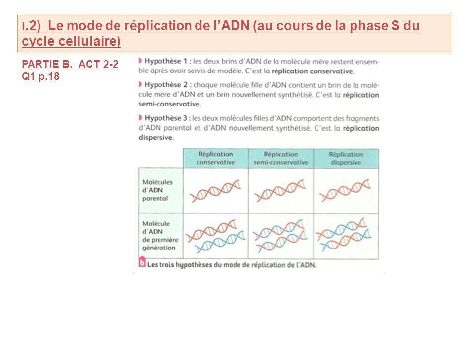 I.2) Le mode de réplication de lADN (au cours de la phase S du cycle cellulaire) PARTIE B.