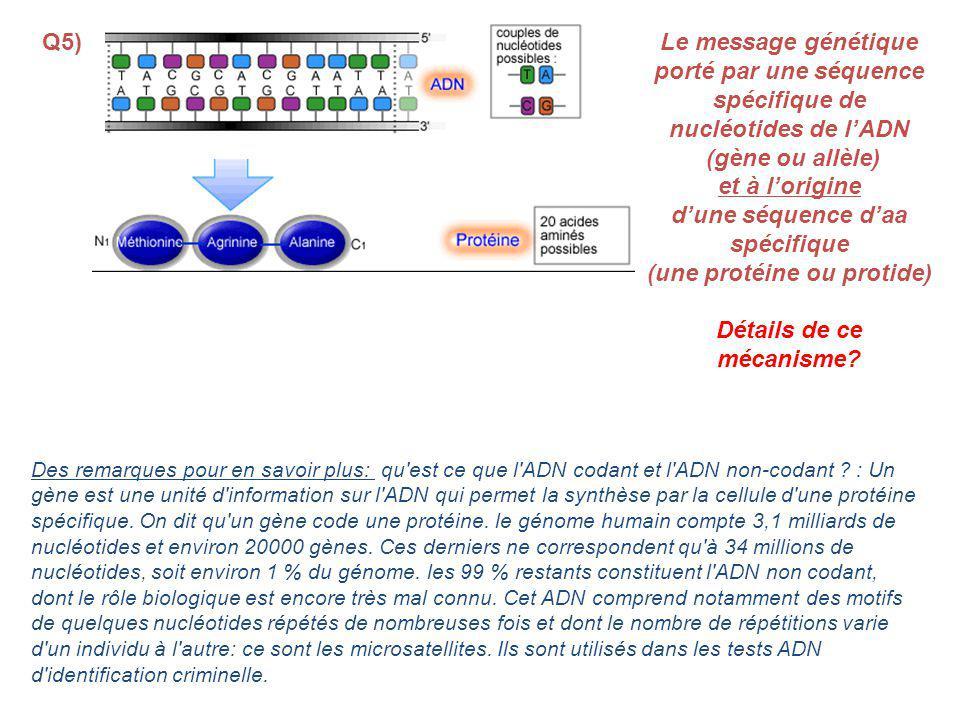 Des remarques pour en savoir plus: qu est ce que l ADN codant et l ADN non-codant .
