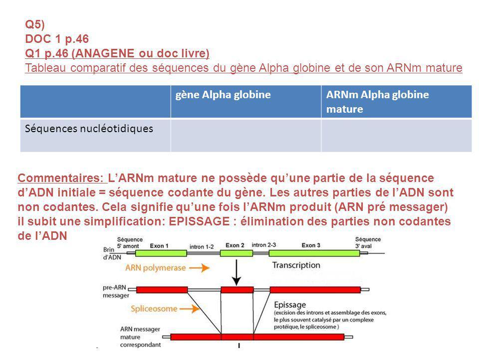 Q5) DOC 1 p.46 Q1 p.46 (ANAGENE ou doc livre) Tableau comparatif des séquences du gène Alpha globine et de son ARNm mature gène Alpha globineARNm Alpha globine mature Séquences nucléotidiques Commentaires: LARNm mature ne possède quune partie de la séquence dADN initiale = séquence codante du gène.